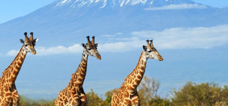 Amboseli Campsite