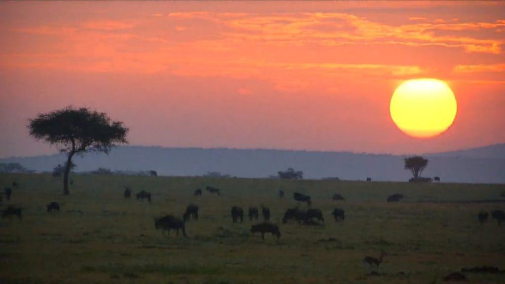 Concept of private wildlife conservancies in Kenya.