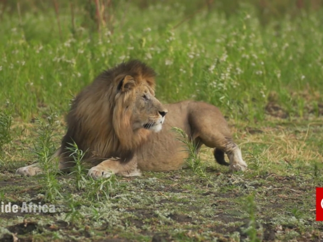 Predators on the Rise: Liwonde National Park in Malawi