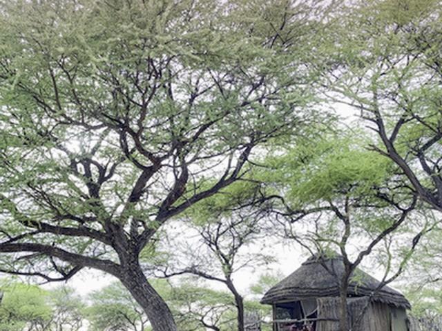 Onguma Tree Top, Namibia