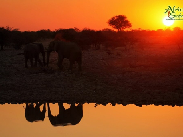 African Reflections - Elephants at waterhole at sunset in Etosha National Park