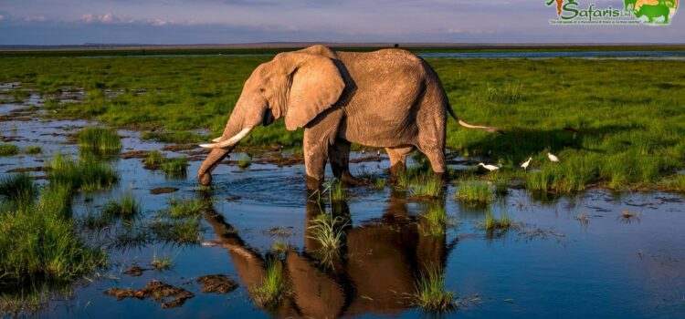 Photography – African Reflections