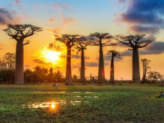Avenue of Baobabs, Madagascar
