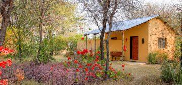 12-day Chobe and Hwange Lodge Safari