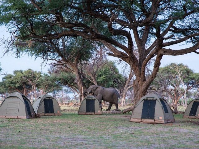 9-day Botswana Wildlife Explorer (Semi-Participation)