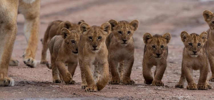 Where to go on an African safari in November?