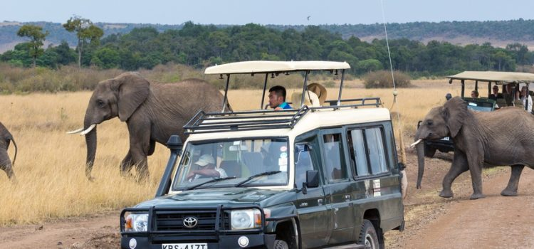 Where to go on an African Safari in August?