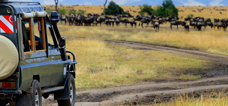 Where to go on an African safari in May?