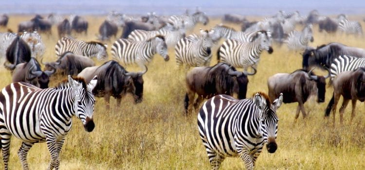 When is the best time to go on safari?