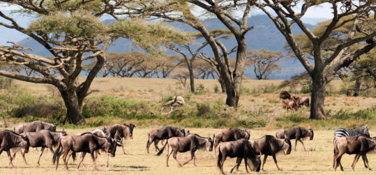 Reopening Africa's borders for tourism