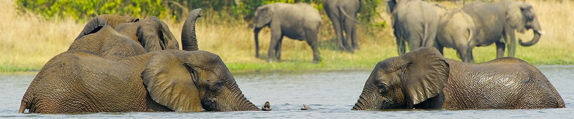 Elephants play with each other