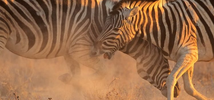 Where to go on an African safari in March?
