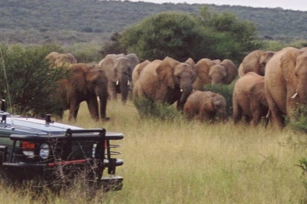 Kruger National Park VS Greater Kruger