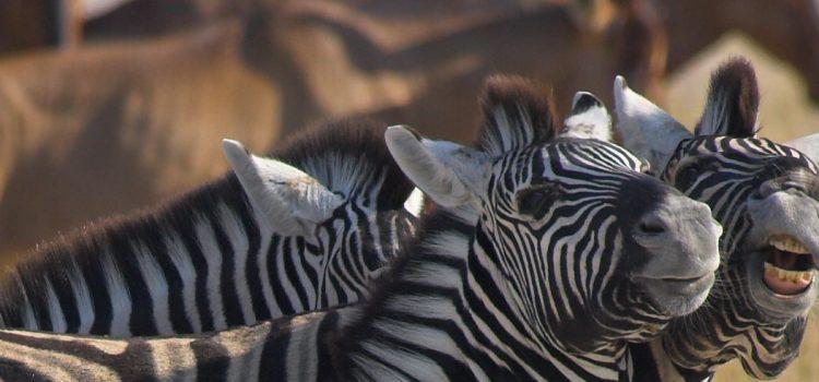 Safari Speak: Learning the Lingo