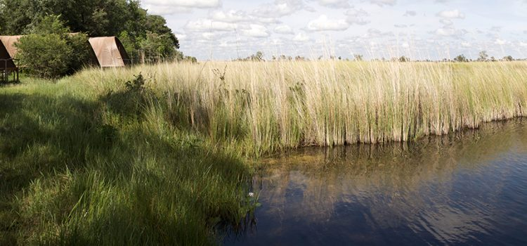 Okavango Delta water levels: An Explanation