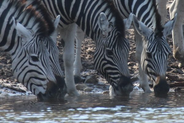 When is best time to travel to Botswana