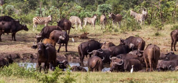 Where to go on an African safari in October?