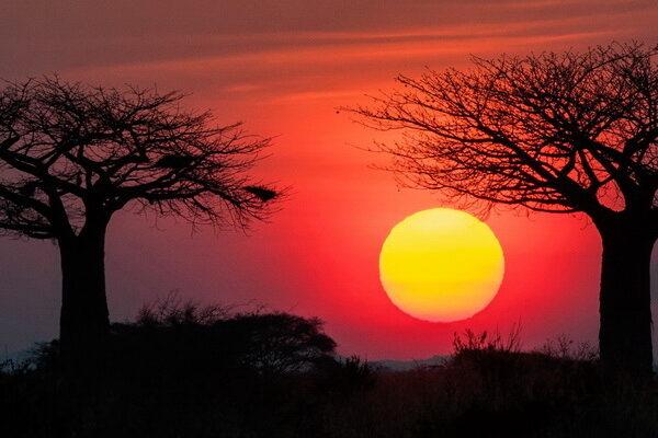 Sunset in Tarangire National Park, Tanzania