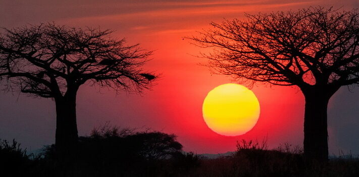 African Sunset in Tarangire National Park