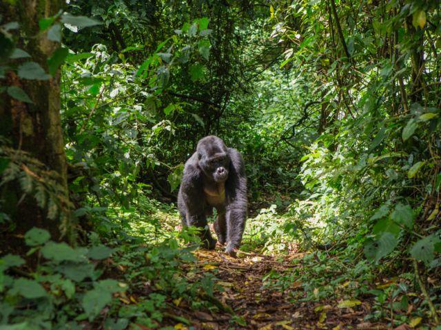 Bwindi Impenetrable Forest National Park, Uganda