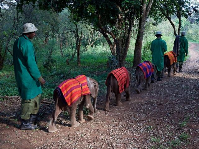 David Sheldrick Wildlife Trust, Kenya