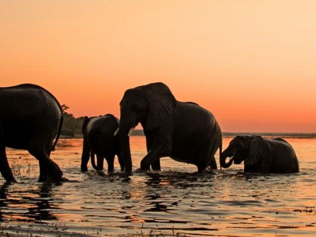 Botswana Safaris and Tours