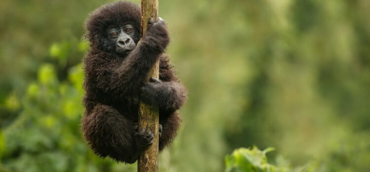 When is a good time to travel to Uganda?