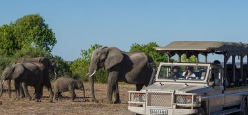 5-day Victoria Falls and Chobe National Park (Superior)