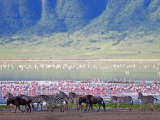 Gibb's Farm, Tanzania