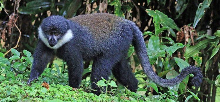 Gishwati-Mukura National Park gets UNESCO status