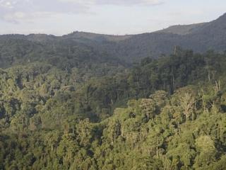 Gishwati Mukura National Park, Rwanda