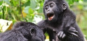 6-day Uganda Gorillas Express