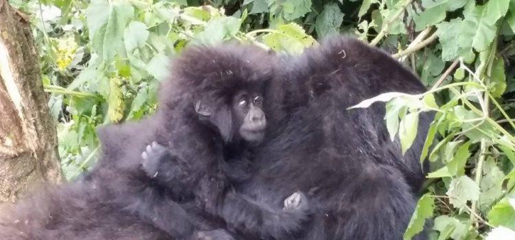 Recent Travels:  Tanzania and Rwanda