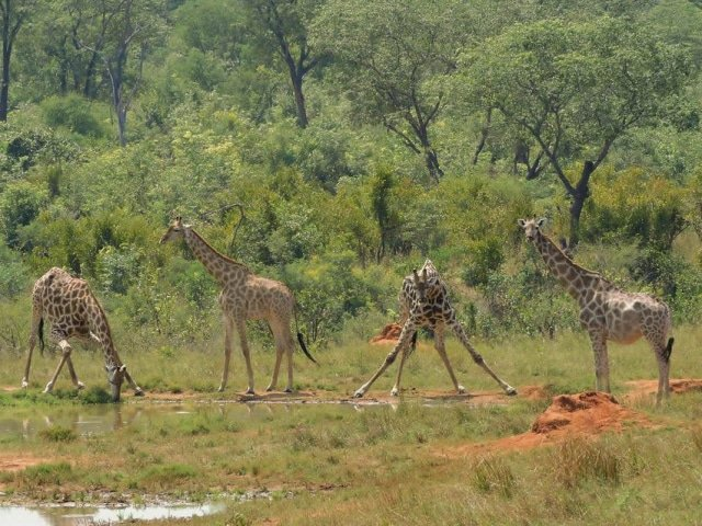 15-day Kruger, Chboe to Victoria Falls Adventure