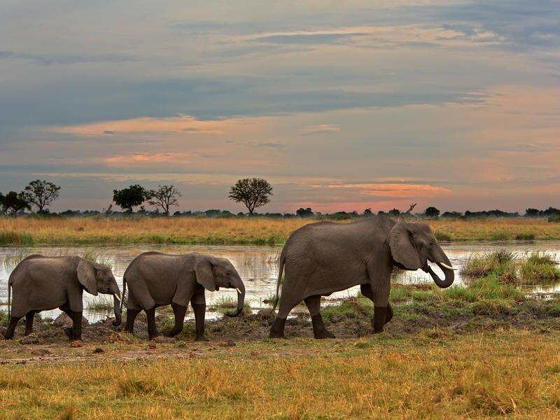 Lagoon Camp, Botswana