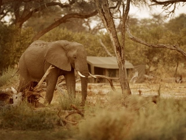 7-day Moremi Magic Safari