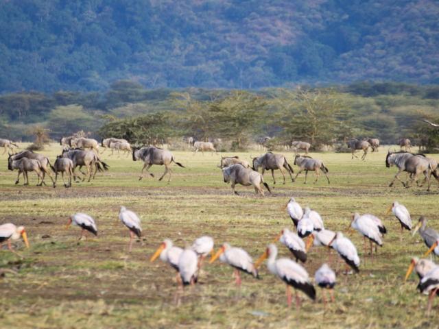 Lake Manyara National Park, Tanzania