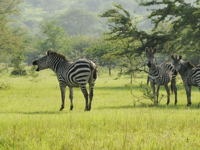 Lake Mburo National Park, Uganda