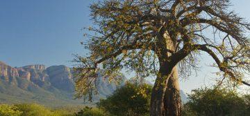 9-day South Africa Family Safari (3 Star)
