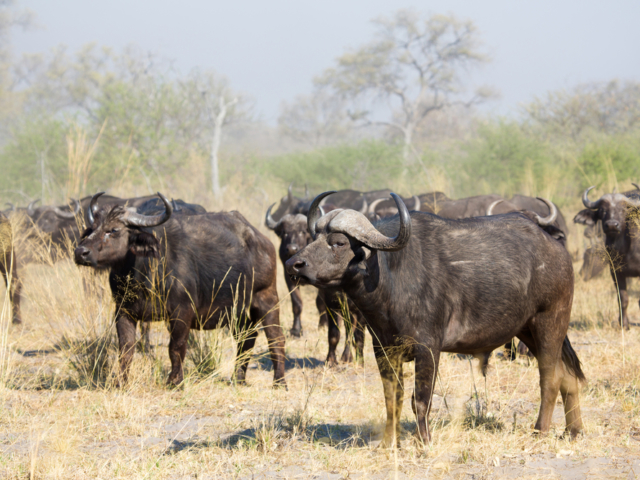 Linyanti Wetlands, Botswana