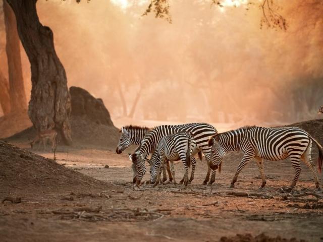 Mana Pools National Park, Zimbabwe