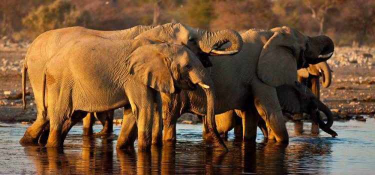 Where to go on African Safari in July?