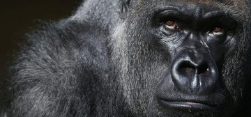 4-day Bwindi Gorilla Trek Fly-in Safari