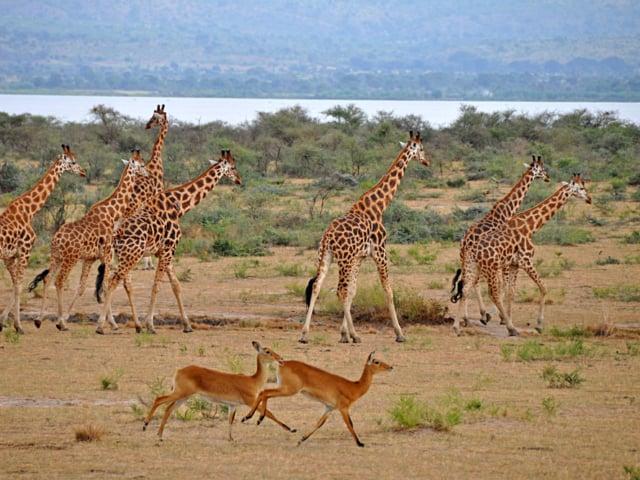 Murchison Falls National Park, Uganda