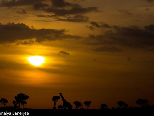 Ol Kinyei Conservancy, Kenya