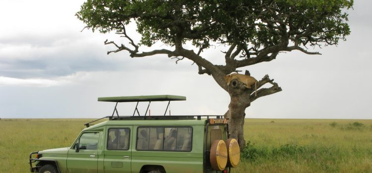 Where to go on an African Safari in January?