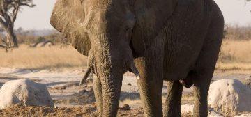 Savuti – Chobe National Park