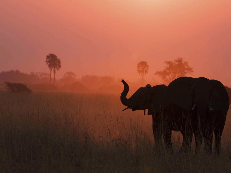 Selinda Reserve, Botswana