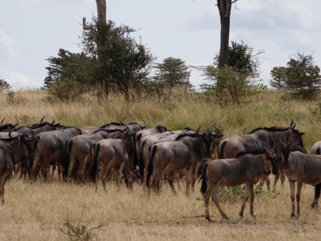 Selous Game Reserve, Tanzania
