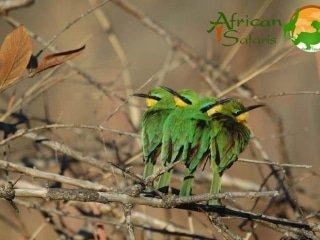 SSNZ 14-day Botswana Wildside (Camping)